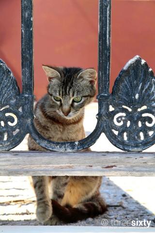 location nomikos mansion santorini cat