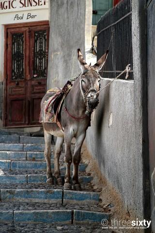 location nomikos mansion santorini donkey